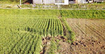 16日未明のマグニチュード7・3の地震で現れたとみられる布田川断層帯沿いの地表のずれ=4月19日午後、熊本県益城町